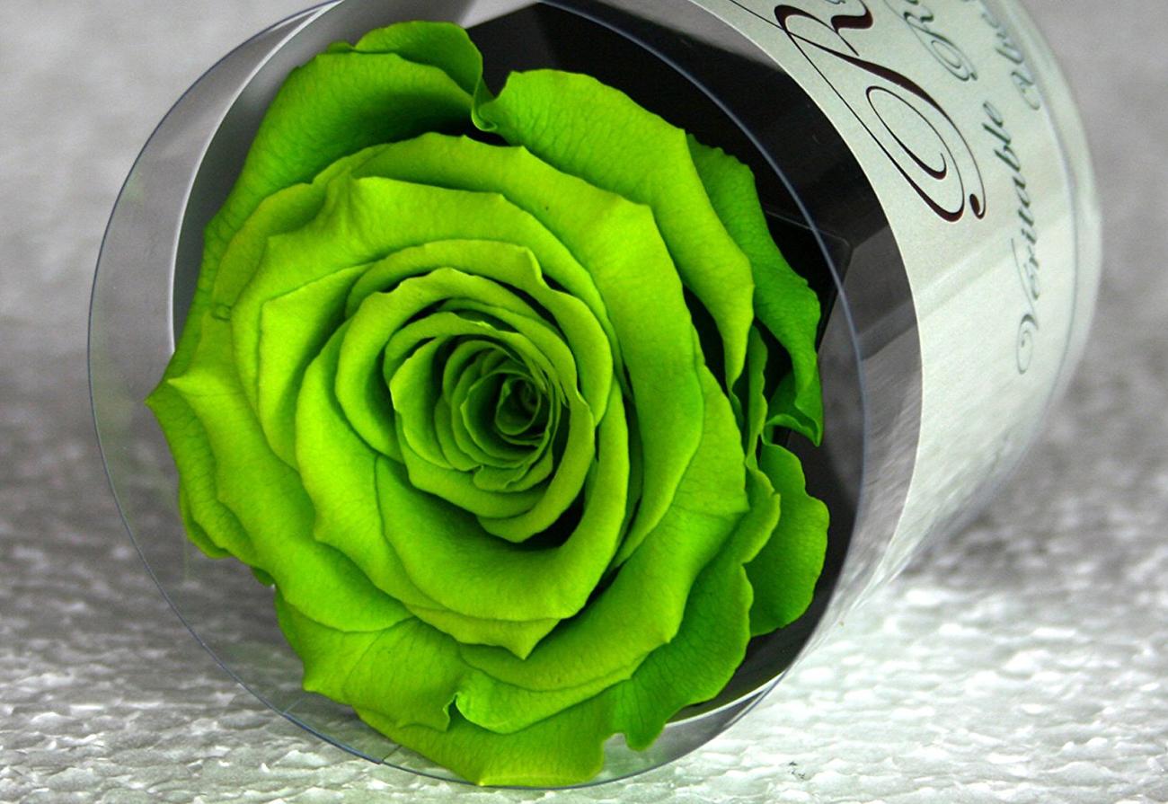 Particolare rosa verde stabilizzata